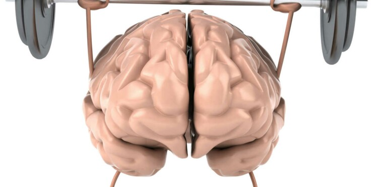 Un mini-cerveau créé en labo !