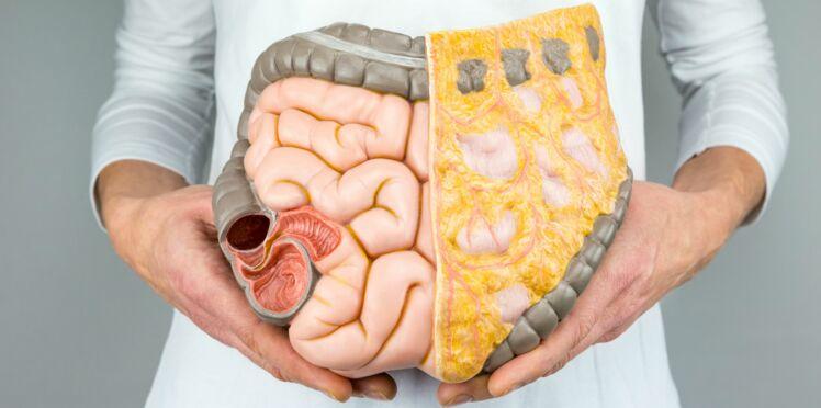 Un premier intestin fonctionnel a été fabriqué en laboratoire