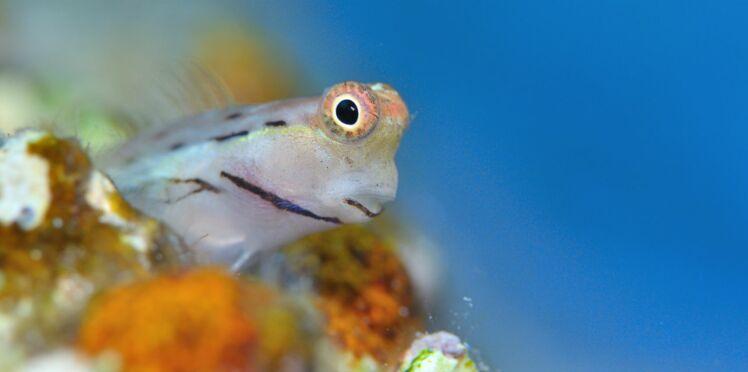 Venin de poisson : l'antidouleur du futur ?