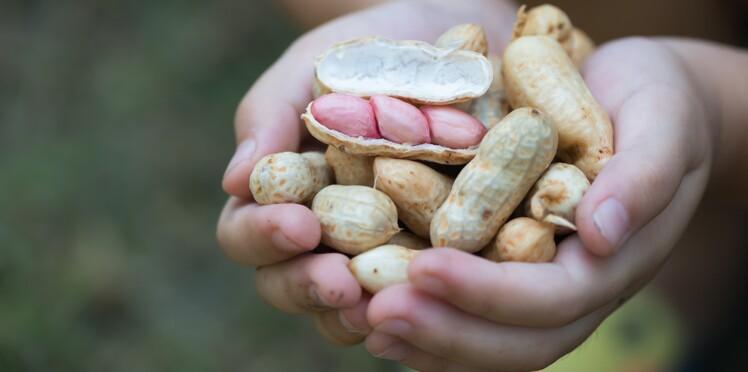 Vers un nouveau traitement contre les allergies à l'arachide?