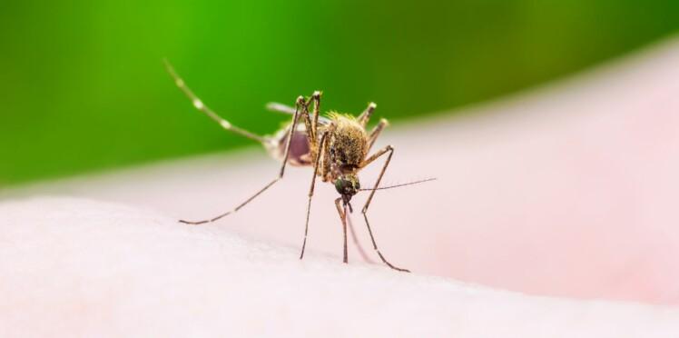 Le virus Zika altère la qualité du sperme sur le long terme