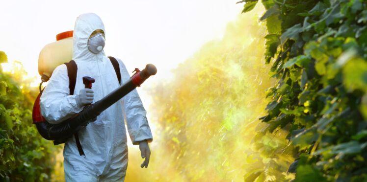 Virus Zika : un insecticide serait responsable des malformations crâniennes