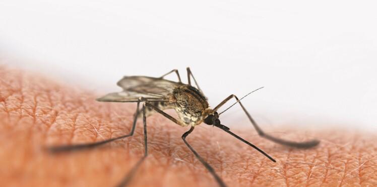 Zika : mort d'un premier nourrisson au Panama