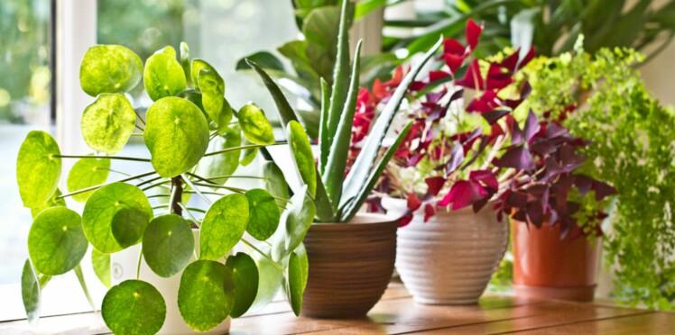 Votre plante est beaucoup plus futée que votre chien