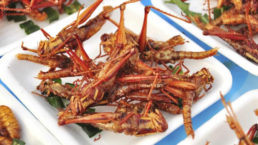 Vous n'aimez pas les insectes ? Mangez-les !