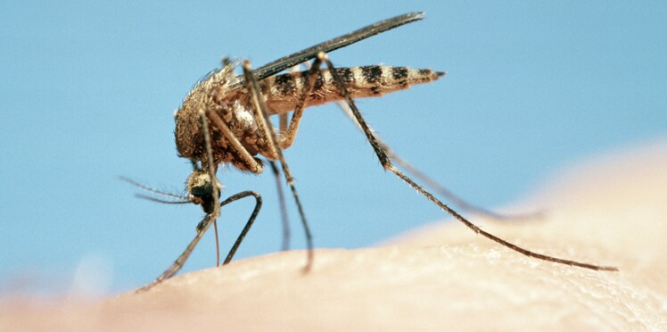 Zika : naissance d'un bébé atteint de microcéphalie en Espagne