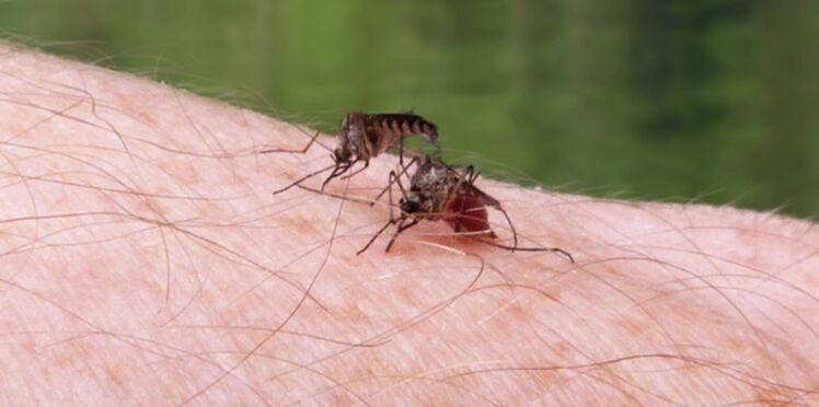 Zika: premier décès en Martinique