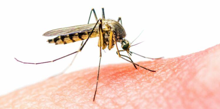 Zika : un tiers de la planète menacé