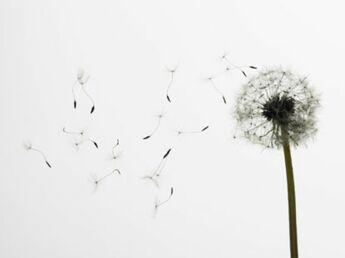 Allergie aux pollens : attention c'est la saison !