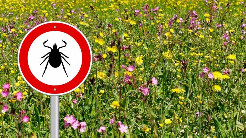 5 choses à savoir sur la maladie de Lyme