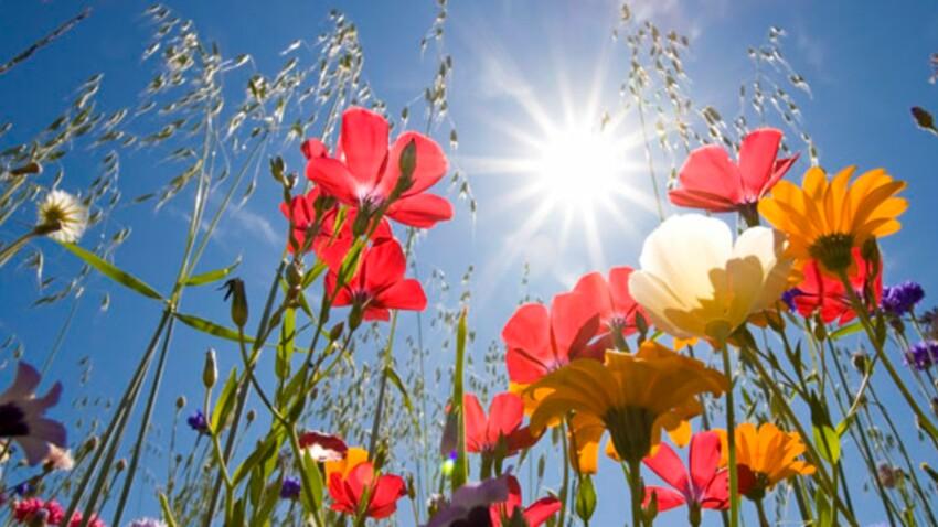 Fleurs de Bach : les fleurs du bien