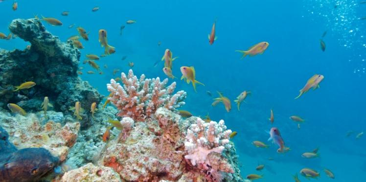 La mer, source de santé (vidéo)