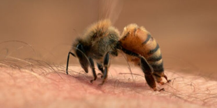 Piqûres d'insectes : attention aux dangers !