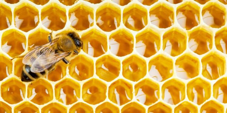 Propolis: le secret santé de la ruche