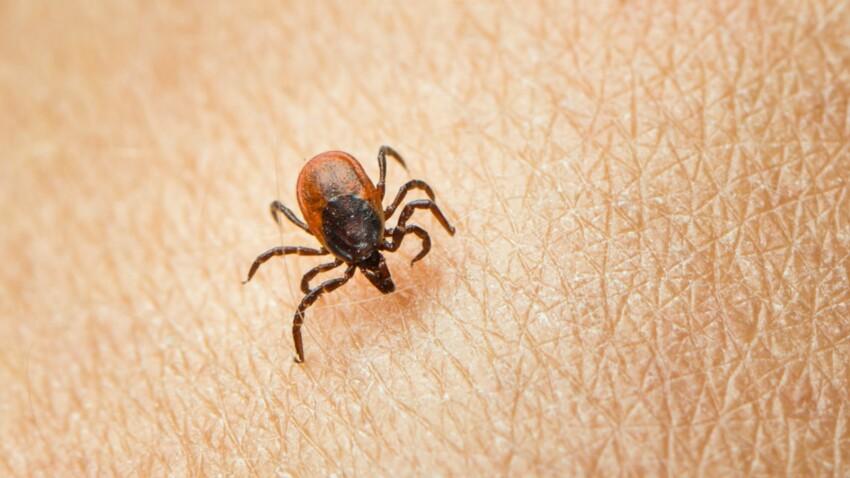 Maladie de Lyme : comment éviter les tiques et que faire en cas de morsure ?