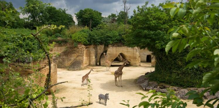 Cadeaux lectrices pour 6 week-end au zoo