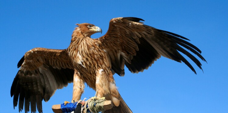 Explorer la nature et faire ami-ami avec la faune en Catalogne, un programme pas si bête!
