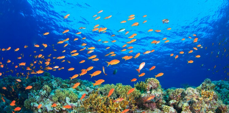 Egypte : magique mer Rouge