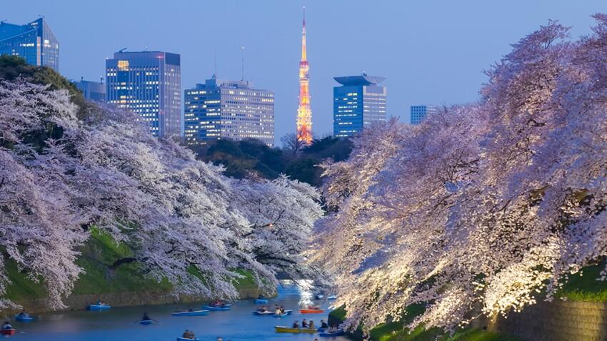 Tokyo, une fascinante mégapole