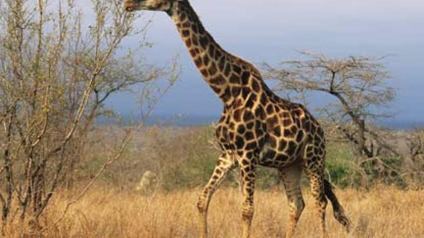 Afrique du Sud : les plus belles régions en images