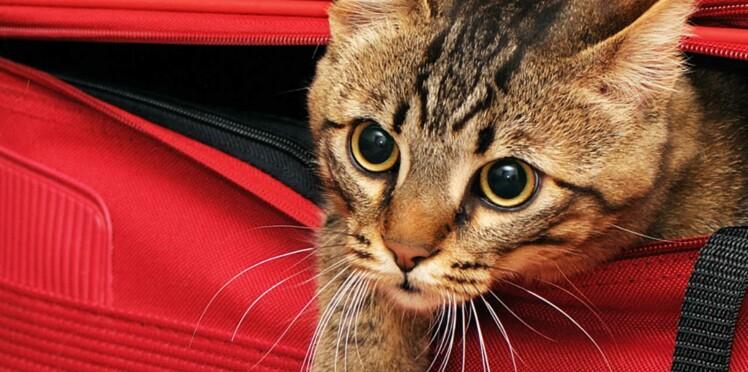 A Paris, les chats auront bientôt leur hôtel