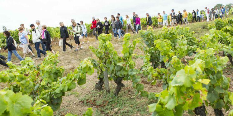 Balades dans le vignoble du Val de Loire