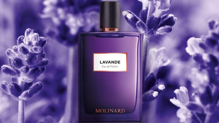 Au coeur de la Provence avec Lavande de Molinard