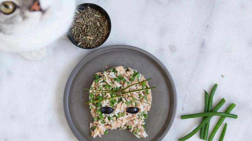 Recette pour chat : salade de riz au thon