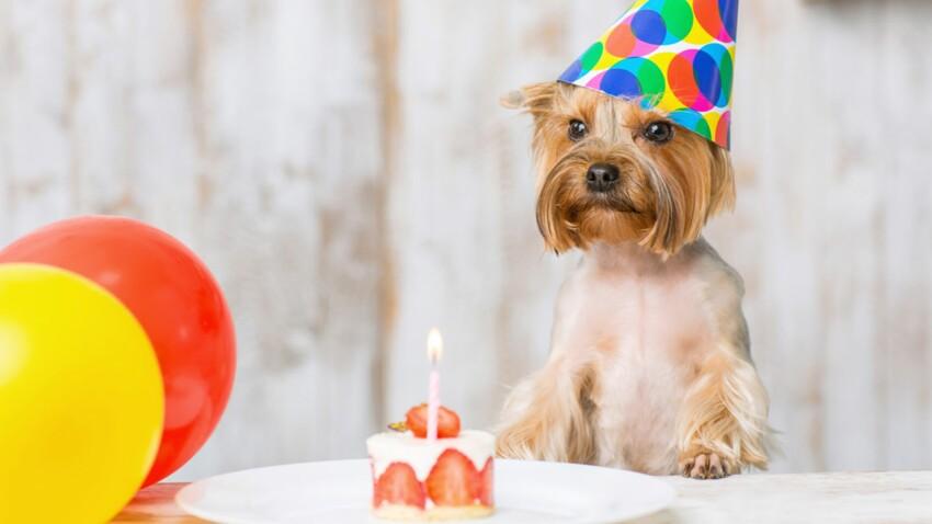 Gâteau d'anniversaire gourmand pour chien