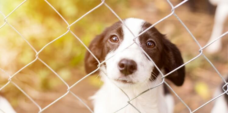 Triste record : la SPA surchargée suite au très grand nombre d'abandons de chiens et chats cet été