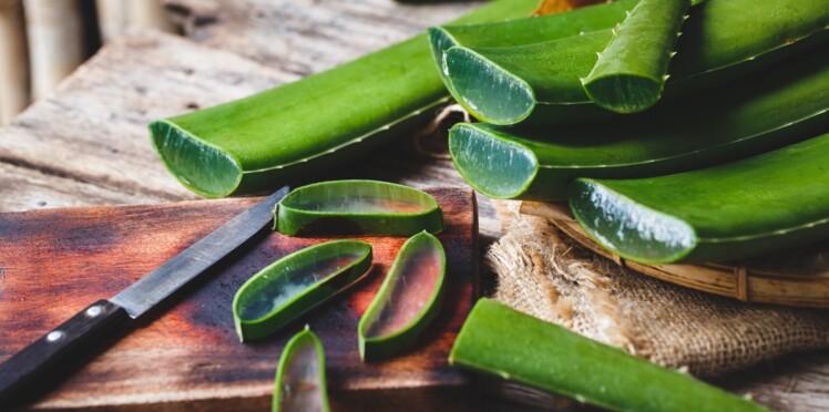 Aloe vera : pourquoi ses feuilles fraîches peuvent être dangereuses