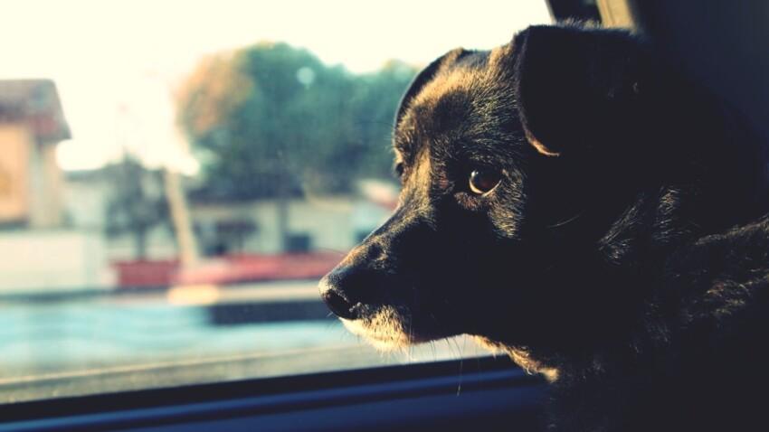 Peut-on secourir un chien enfermé dans une voiture en plein soleil ?
