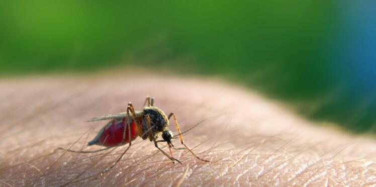 Retour du virus West Nile, transmis par les moustiques : comment s'en protéger ?