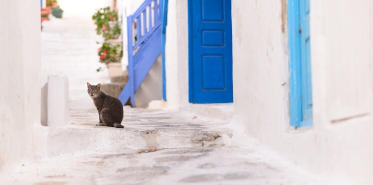 Job de rêve : gardez 55 chats sur une île grecque