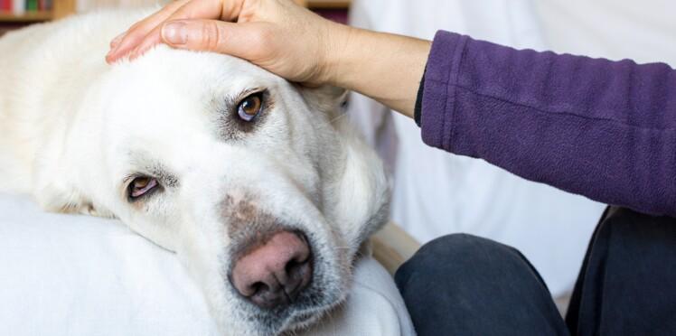 Une bactérie canine cause le décès d'une femme, après avoir entraîné l'amputation d'un homme