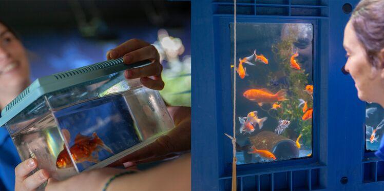 Découvrez le refuge pour poissons rouges abandonnés à l'aquarium de Paris