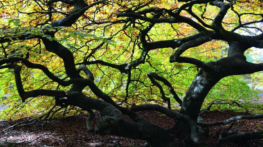 3 arbres exceptionnels à rencontrer en France