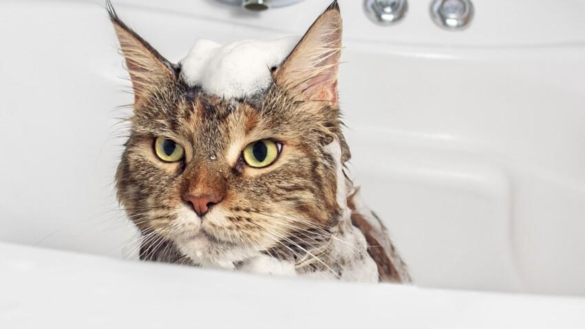 Peut-on donner un bain à son chat ?