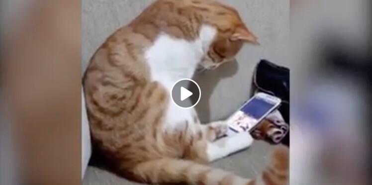 Vidéo - Un chat regarde une vidéo de son maître décédé et ne peut contenir son émotion