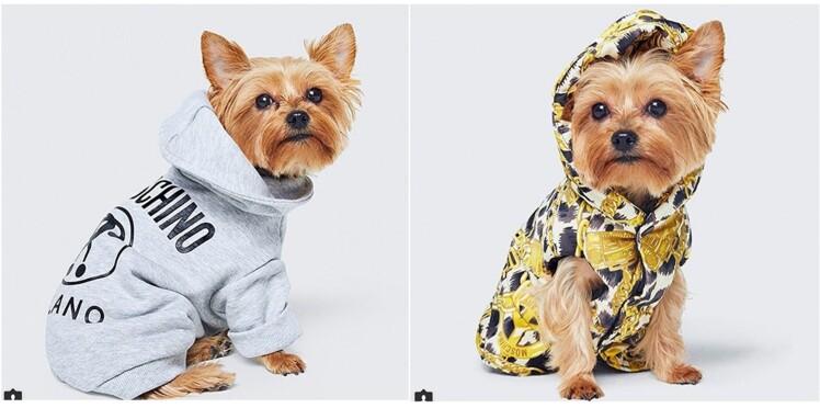 H&M et Moschino s'allient pour habiller votre chien