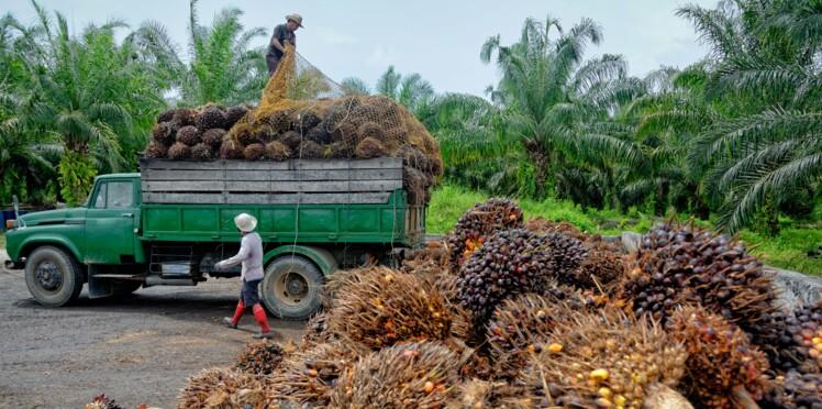 Faut-il boycotter l'huile de palme?