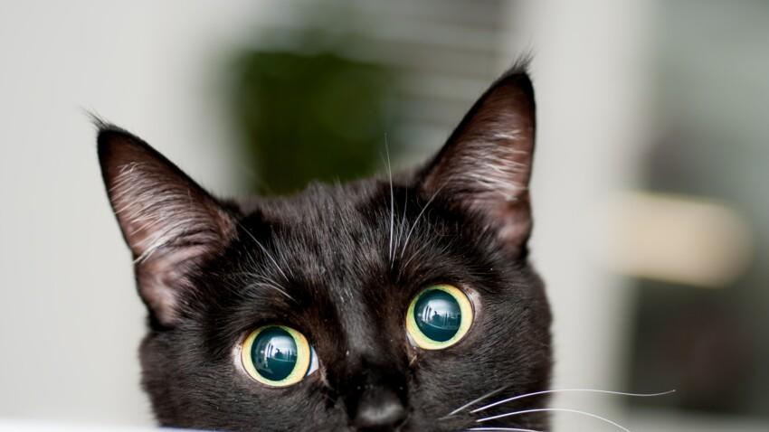 Bientôt une Maison des Chats à Paris pour faciliter leur adoption ?