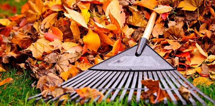 Que faire au jardin en automne ?