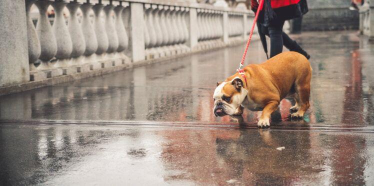 Pour ou contre une loi ultra-protectrice des animaux?