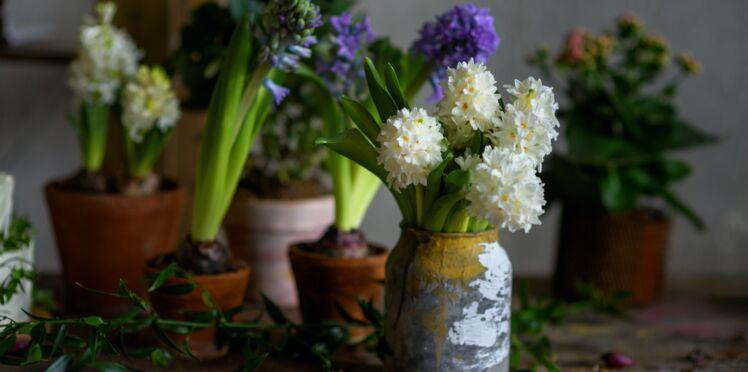 Comment faire fleurir une jacinthe en hiver ?