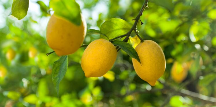 Huile essentielle de citron : 7 façons de l'utiliser en beauté