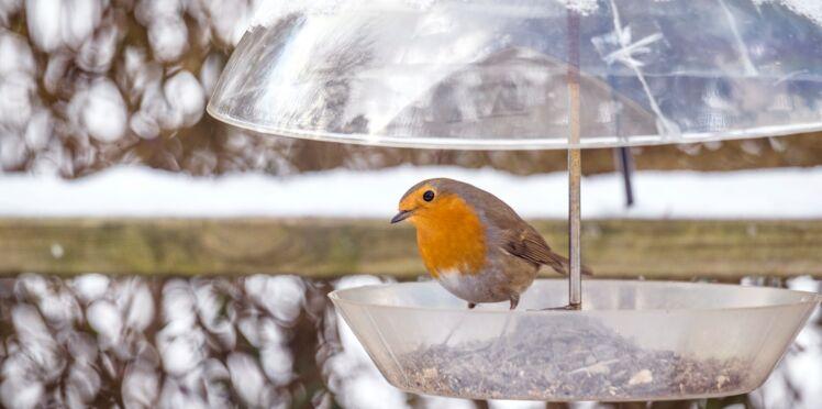 Quand et comment nourrir les oiseaux au jardin