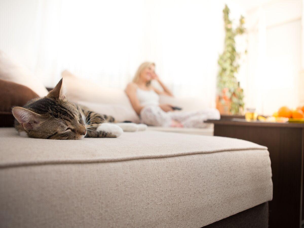 Mauvaise Odeur Armoire Linge comment éliminer une odeur d'urine de chat ou de chien