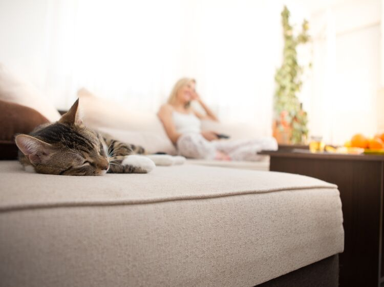 comment liminer une odeur d urine de chat ou de chien. Black Bedroom Furniture Sets. Home Design Ideas