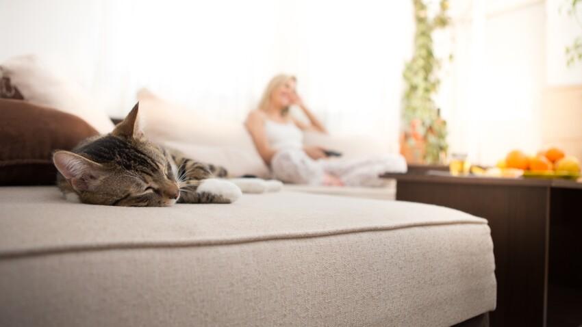 Comment éliminer une odeur d'urine de chat ou de chien ?